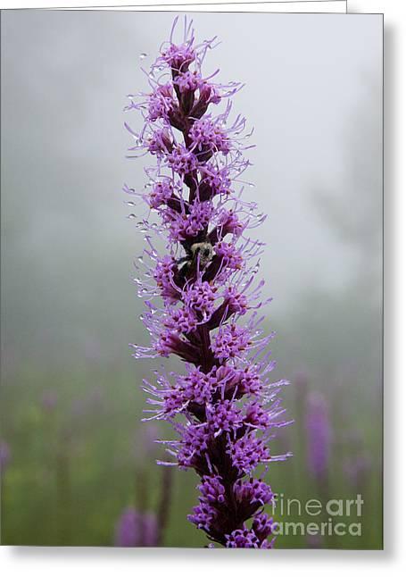Dewdrops Greeting Cards - Soft Morning Dew - Blue Ridge Mountains I Greeting Card by Dan Carmichael