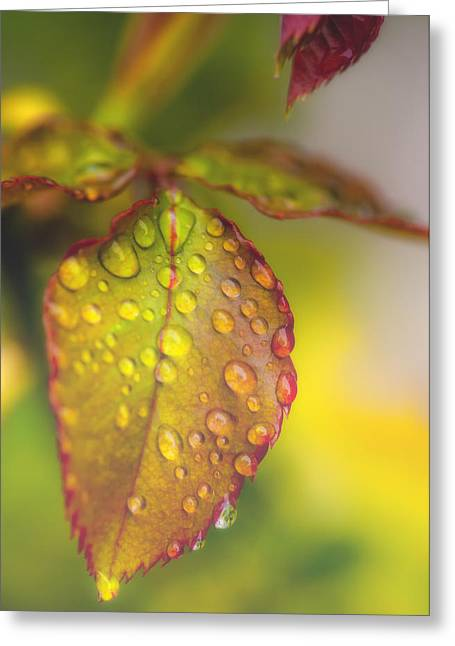 Soft Morning Rain Greeting Card by Stephen Anderson
