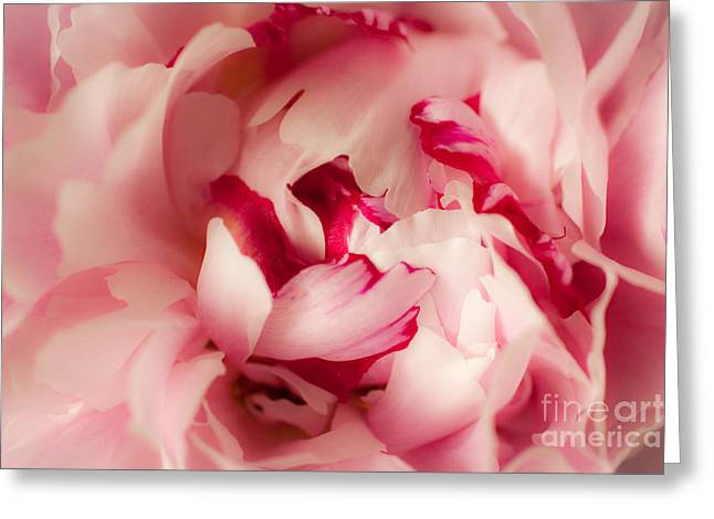 Rosy Greeting Cards - Soft Peony Greeting Card by Ana V  Ramirez