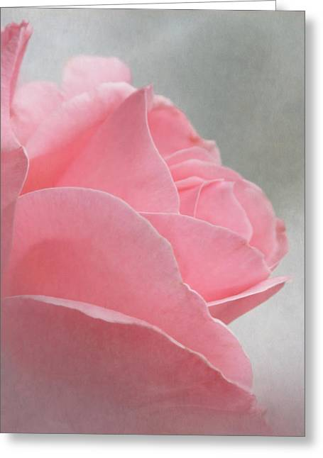Soft Petals Greeting Card by Angie Vogel