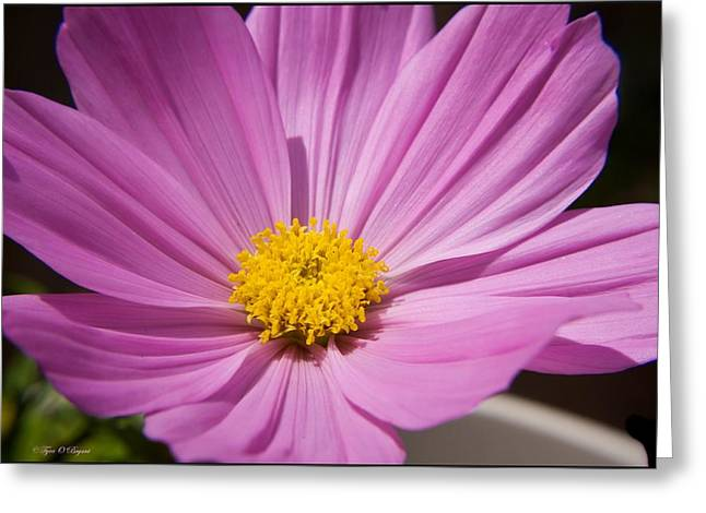 Soft Petals Greeting Card by Tyra  OBryant
