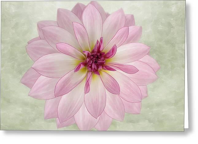 Kim Photographs Greeting Cards - Soft Pink Dahlia Greeting Card by Kim Hojnacki