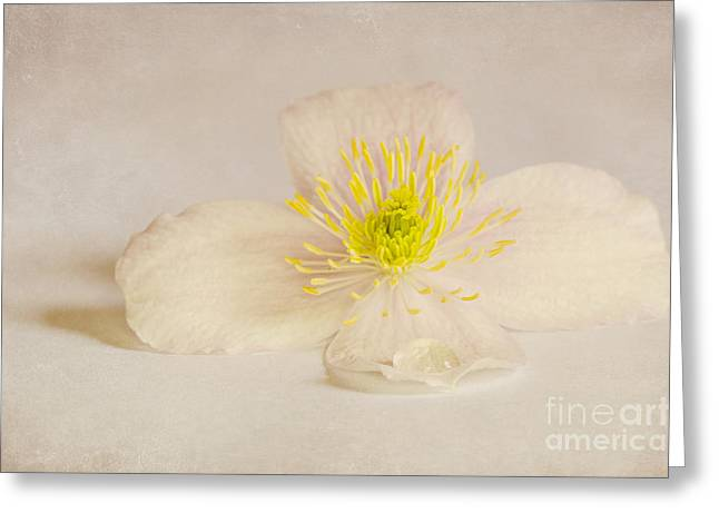 Dusky Pink Greeting Cards - Soft Pink Flower Greeting Card by Svetlana Sewell