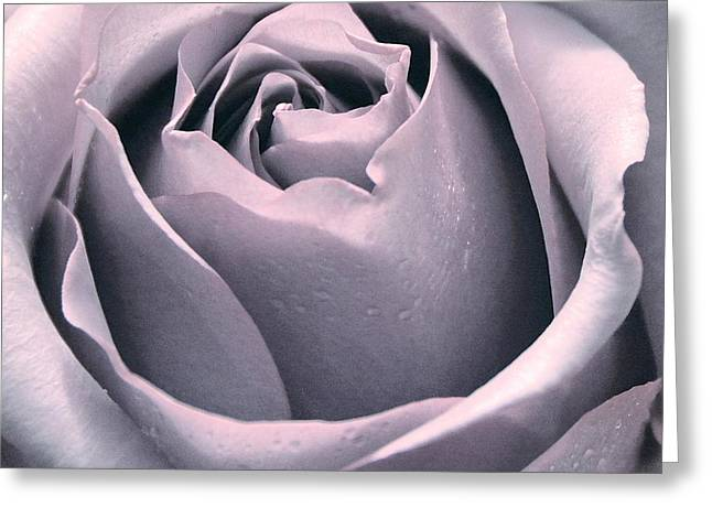 Dripping Rose Greeting Cards - Soft Pink Rose Greeting Card by Rachel Cash