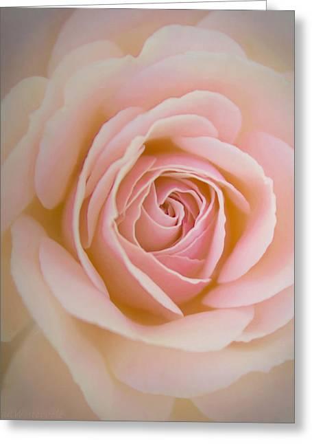 Close Focus Floral Greeting Cards - Soft Pink Rose Greeting Card by Susan Westervelt