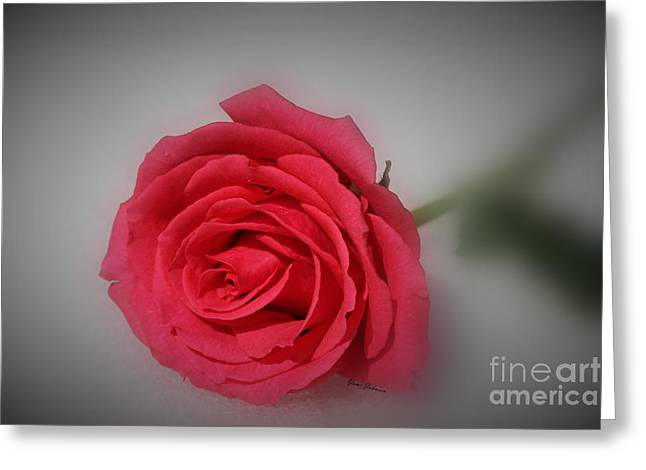 Soft Red Rose Greeting Card by Yumi Johnson