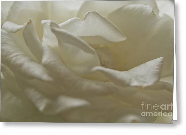 Divorce Greeting Cards - Soft Rose  Greeting Card by Sandra Clark