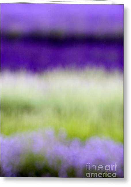 Lavandula Greeting Cards - Soft Shades of Lavender Greeting Card by Tim Gainey