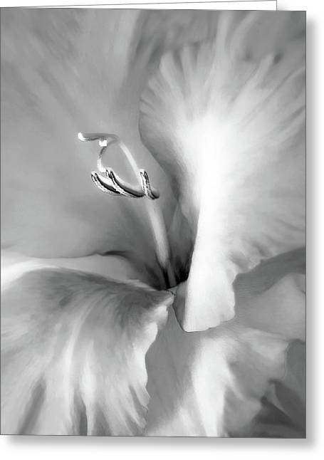 Gladiolas Greeting Cards - Soft Silver Gladiola Floral Greeting Card by Jennie Marie Schell
