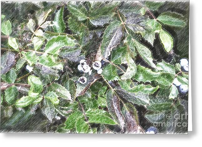 Blue Grapes Photographs Greeting Cards - Soft Sketching of Gods Hands Greeting Card by Beverly Guilliams