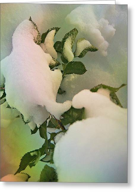 Design With Photography Greeting Cards - Soft Snow Forms 4 Greeting Card by Shirley Sirois