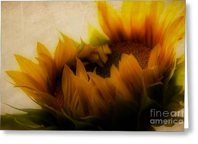 Recently Sold -  - Flower Design Greeting Cards - Soft Sunflower Greeting Card by K Hines