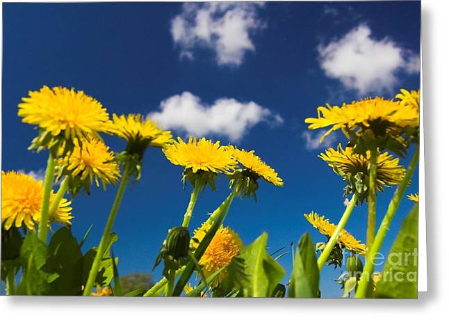 Ble Sky Greeting Cards - Soft thistle Greeting Card by Michal Bednarek