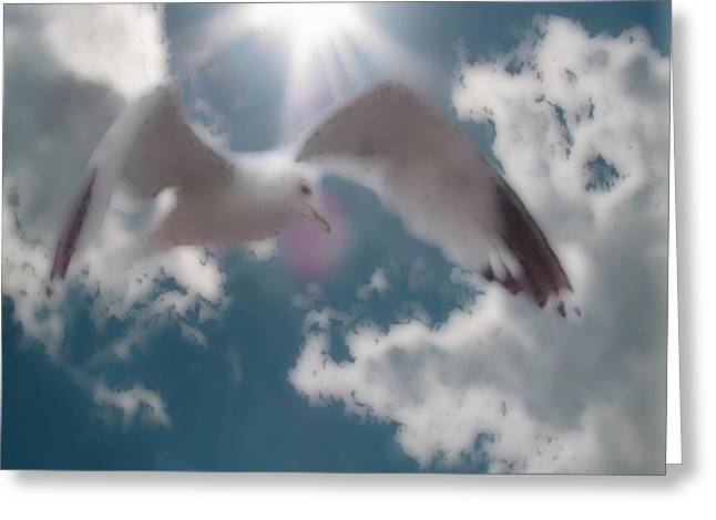 Flying Seagull Mixed Media Greeting Cards - Soft Touch Seagull Fly  Greeting Card by Debra     Vatalaro