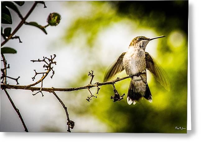Warm Tones Greeting Cards - Hummingbird - Soft Touchdown Greeting Card by Barry Jones
