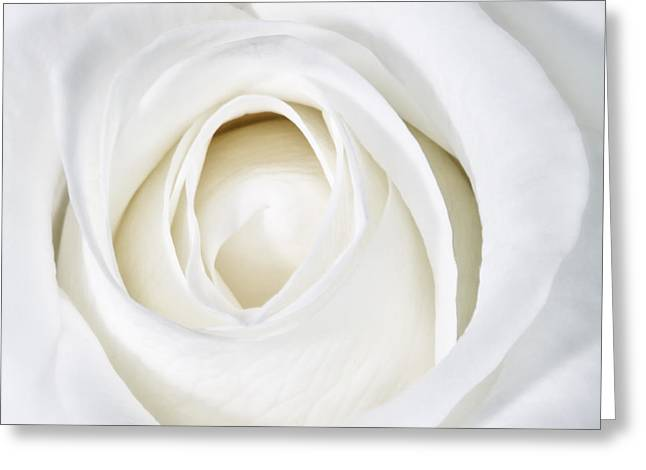 Rose Photos Greeting Cards - Soft White Rose Greeting Card by Kate McKenna