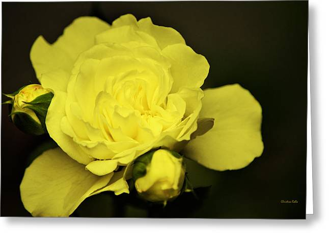 Rose Petals Greeting Cards - Soft Yellow Rose Greeting Card by Christina Rollo