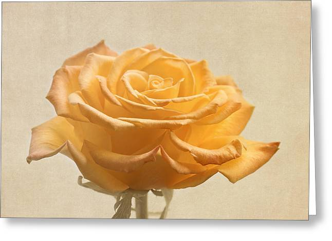 Sweetness Greeting Cards - Soft Yellow Rose Flower Greeting Card by Kim Hojnacki