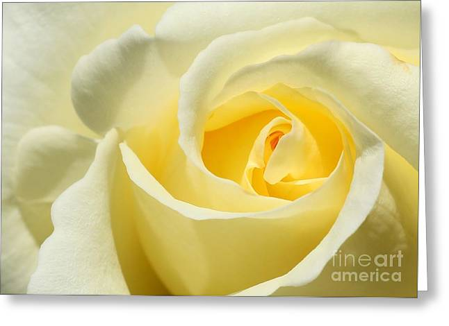 Soft Yellow Rose Greeting Card by Sabrina L Ryan