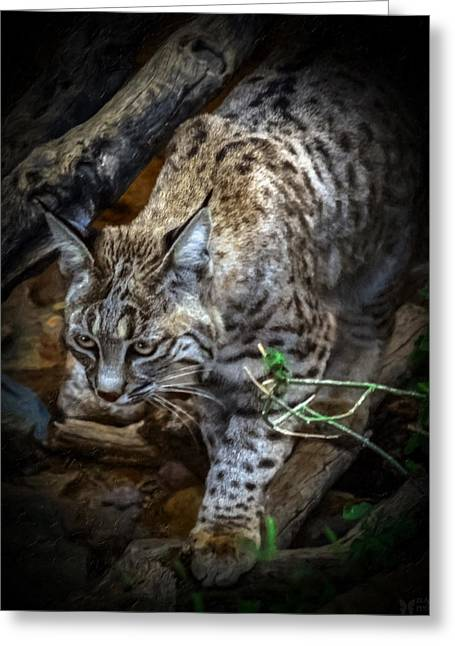 Best Sellers -  - Bobcats Mixed Media Greeting Cards - Soften Bobcat Greeting Card by Elaine Malott