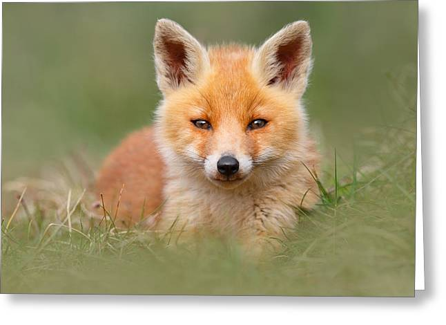 Suckling Greeting Cards - SoftFox -Young Fox Kit Lying in the Grass Greeting Card by Roeselien Raimond