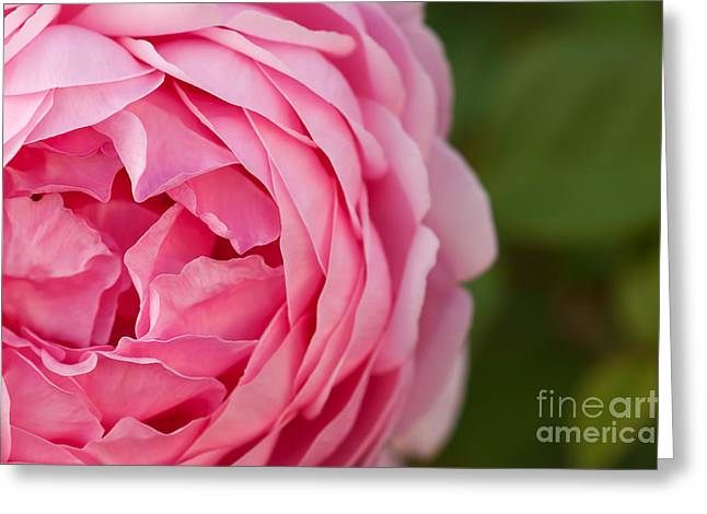 Softly I Unfold Greeting Card by Catherine Fenner
