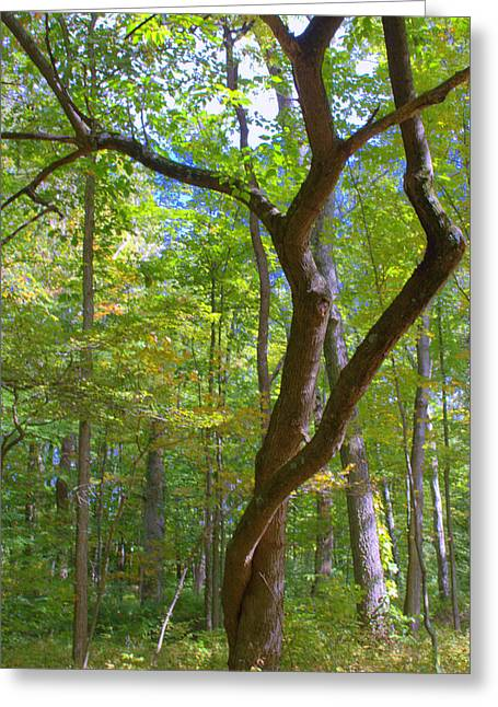 Graceful Tree Greeting Cards - Softly in the Woods Greeting Card by Mindy Newman