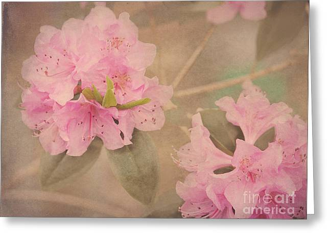 Azalias Greeting Cards - Softly Pink Greeting Card by Arlene Carmel
