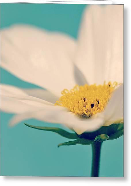 Softly Spoken Greeting Card by Melanie Moraga