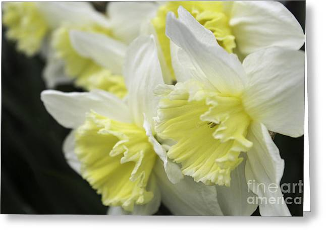 Softly Spring Greeting Card by Arlene Carmel