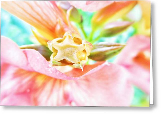 Star Shape Greeting Cards - Softness Greeting Card by Marianna Mills