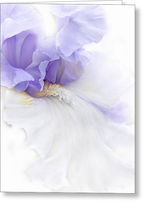 Bearded Iris Greeting Cards - Softness of a Lavender Iris Flower Greeting Card by Jennie Marie Schell
