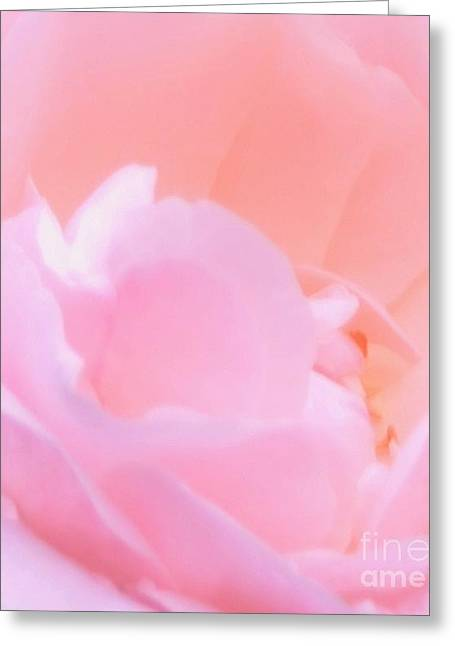 Heavenly Scent Greeting Cards - Softness Of A Rose Greeting Card by Kathleen Struckle