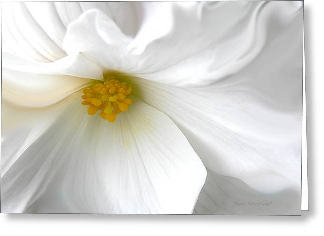 Begonias Greeting Cards - Softness of a White Begonia Flower Greeting Card by Jennie Marie Schell