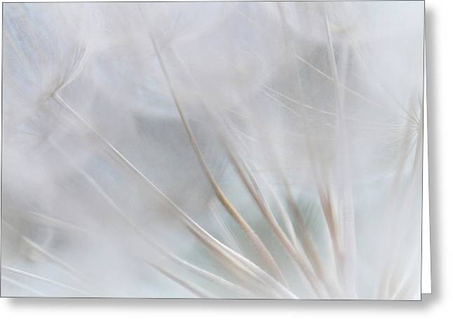 Dandelions Greeting Cards - Softness Greeting Card by  The Art Of Marilyn Ridoutt-Greene