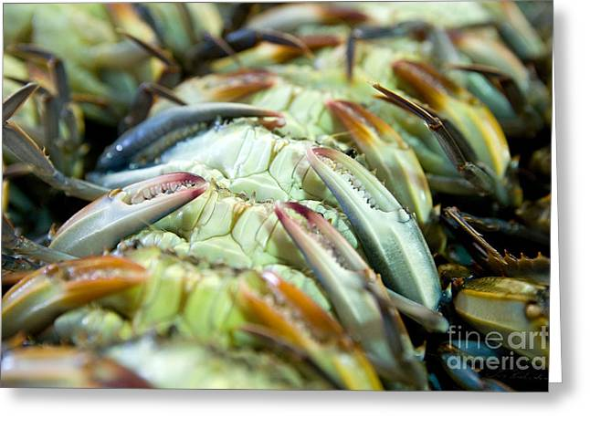 Callinectes Sapidus Greeting Cards - Softshell Blue Crabs on their backs Greeting Card by Iris Richardson
