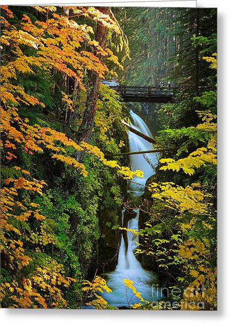 Sol Duc Falls In Autumn Greeting Card by Inge Johnsson