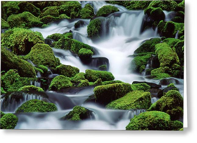 Beautiful Creek Greeting Cards - Sol Duc Greeting Card by Ginny Barklow