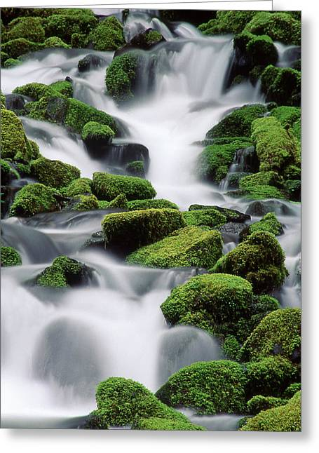 Recently Sold -  - Water Flowing Greeting Cards - Sol Duc Stream Greeting Card by Ginny Barklow
