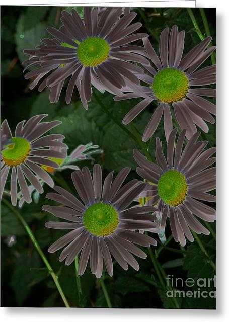Aster Mixed Media Greeting Cards - Solarize Greeting Card by Chalet Roome-Rigdon