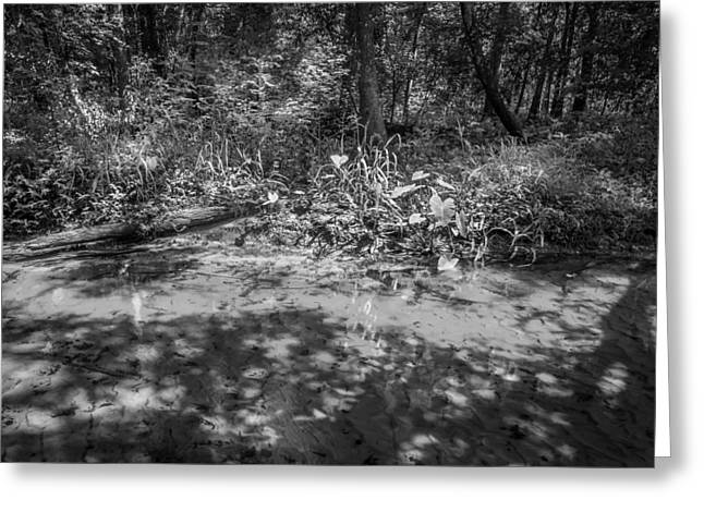 Tannic Greeting Cards - Soldiers Creek Seminole County Florida BW Greeting Card by Rich Franco