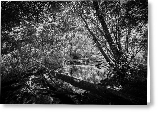 Environmental Center Greeting Cards - Soldiers Creek Seminole County Florida Environmental Center Along the Florida Trail BW    Greeting Card by Rich Franco