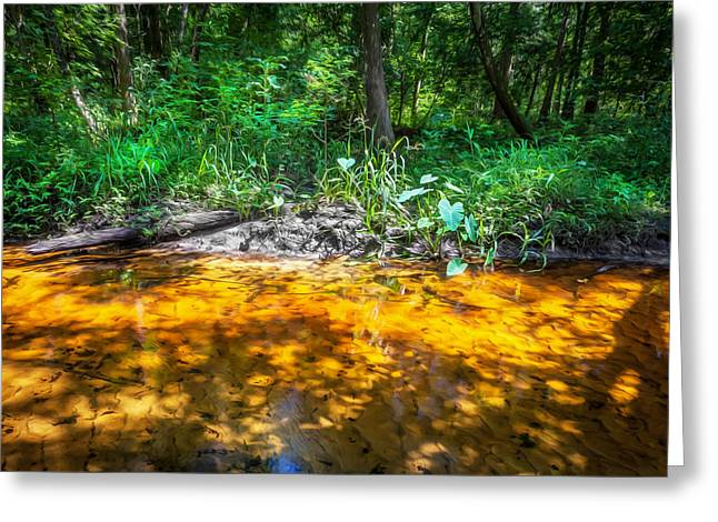 Environmental Center Greeting Cards - Soldiers Creek Seminole County Florida Greeting Card by Rich Franco