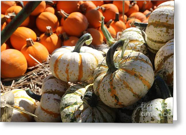 Farm Stand Greeting Cards - Solids and Stripes Greeting Card by Mary Haber