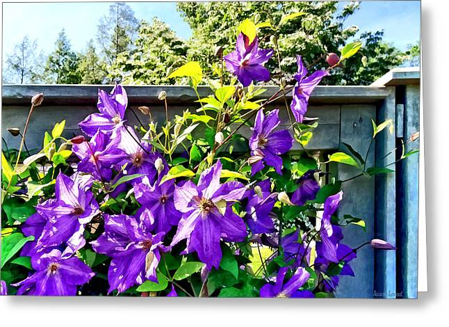 Gardeners Greeting Cards - Solina Clematis on Fence Greeting Card by Susan Savad