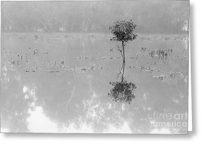 Floodplain Greeting Cards - Solitaire Greeting Card by Linda Lees