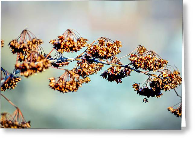Auburn Ma Greeting Cards - Solitary Branch Greeting Card by Black Brook Photography
