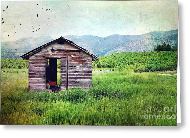 Mountain Cabin Photographs Greeting Cards - Solitary cabin Greeting Card by Sylvia Cook