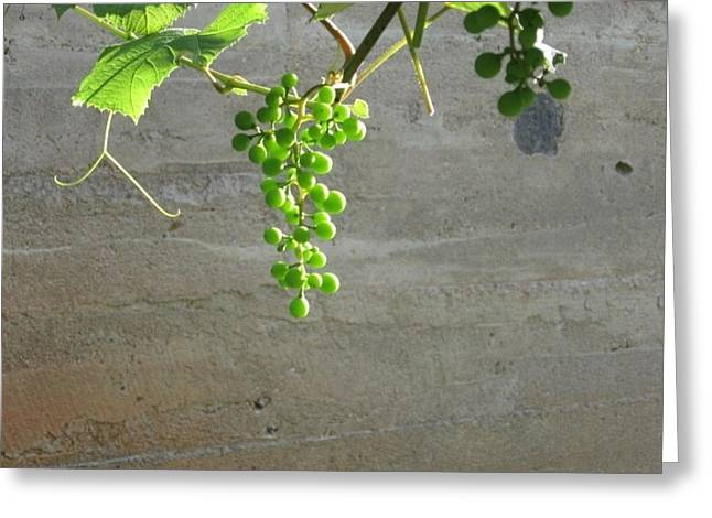 Concord Grapes Greeting Cards - Solitary Grapes Greeting Card by Deb Martin-Webster
