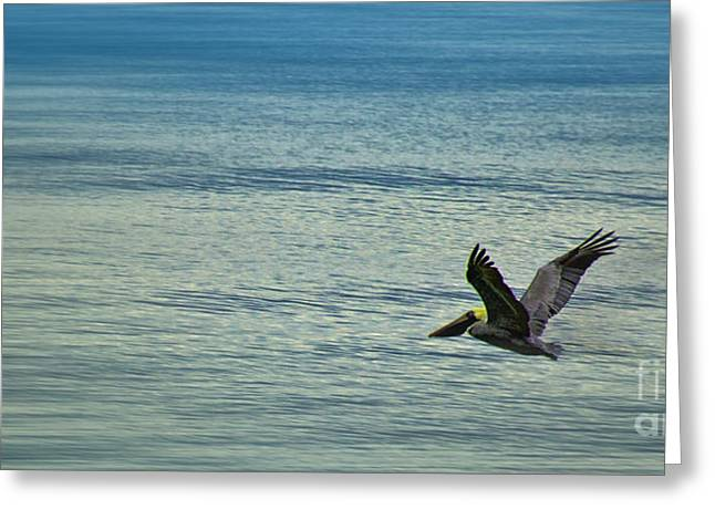 Ocean Art Photos Greeting Cards - Solitary Pelican Greeting Card by Dave Bosse